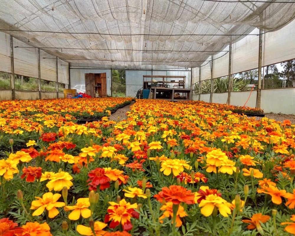 Escolas recebem cerca de 1.600 mudas de flores