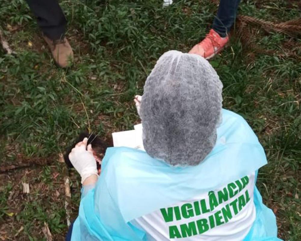 Mais nove bugios mortos foram encontrados em São Marcos